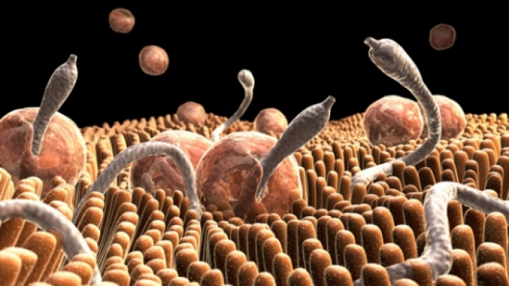 ce medicament ajută la viermi hpv gorge symptomes