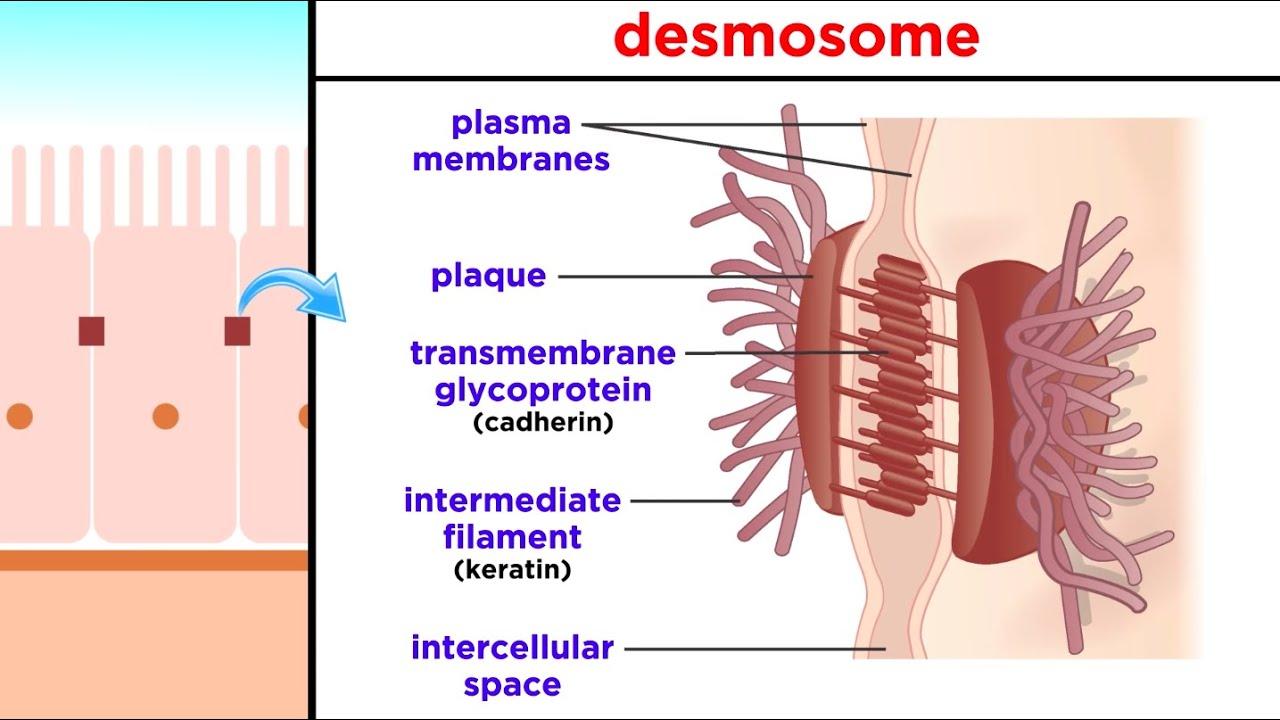 helmintox devas tratament pt oxiuri in alaptare