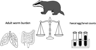 helminth worm burden viermi și tratamentul lor la om
