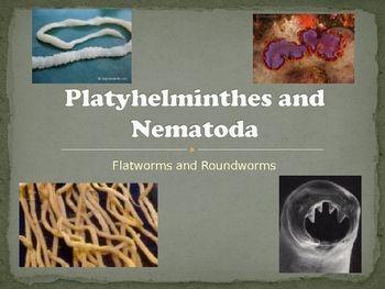 nematode ppt phylum platyhelminthes hpv szemolcs eltavolitas otthon