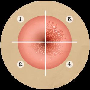 papillomavirus salive