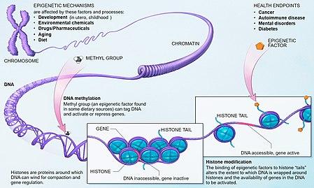 cancer benign tumour cum să scapi de paraziți de helminți