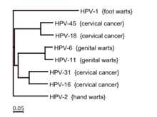 cancer colon genetic