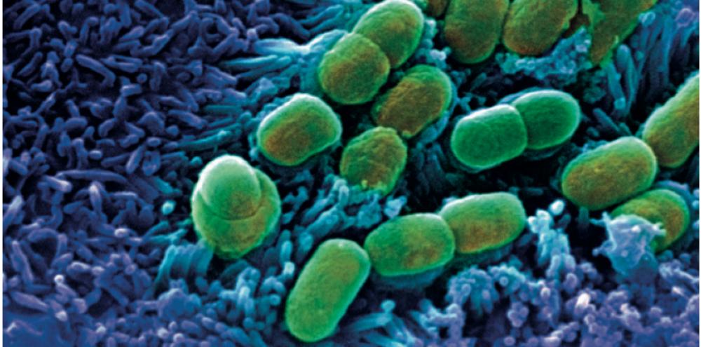 bacterie qui ronge les os simptomele paraziților umani