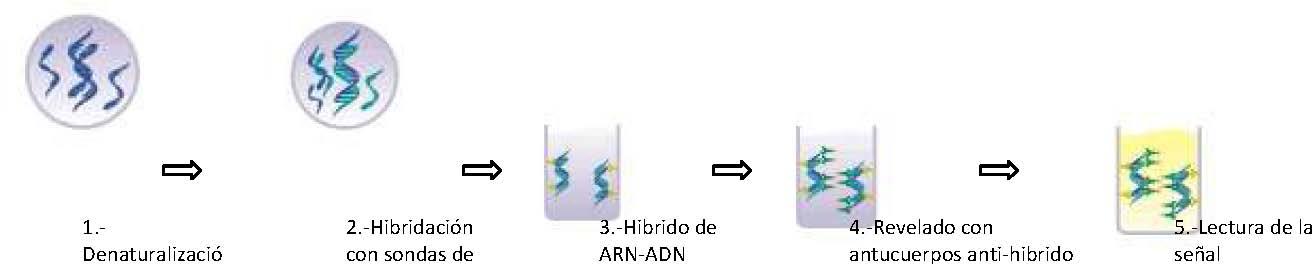 Papiloma virus humano por pcr tiempo real, Microbiología Basica - PDF Free Download