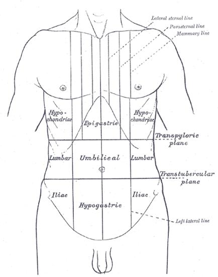 viermi principali împotriva viermilor viermi în tratamentul capului