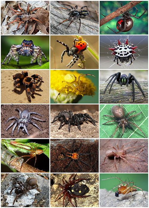 Arată paraziți, Site-ul de stiri Nr.1, Insecte și păianjeni paraziti trippanosomatide
