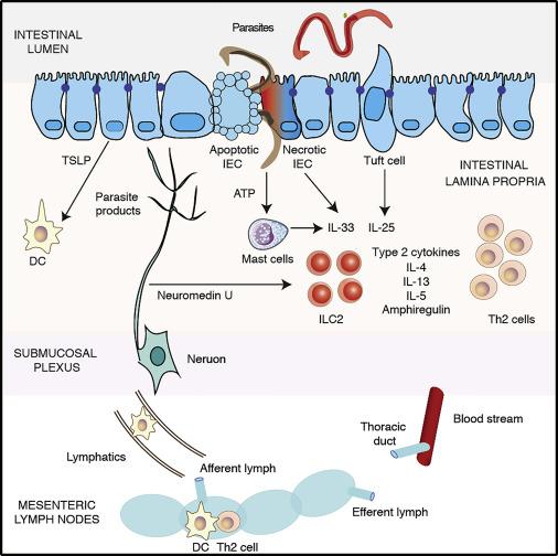 hpv virus is present paraziți ornitină amoniac