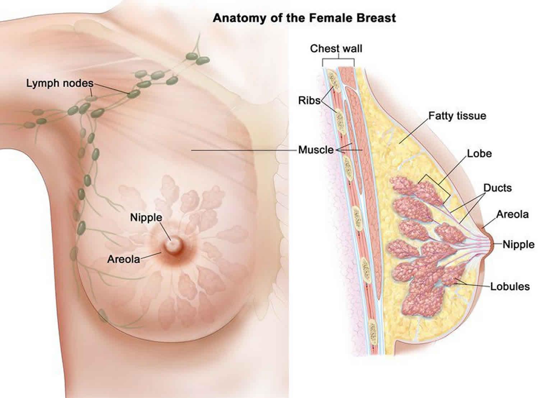sintomi papilloma cervice ouăle de vierme rotunde sunt tratament fertilizat
