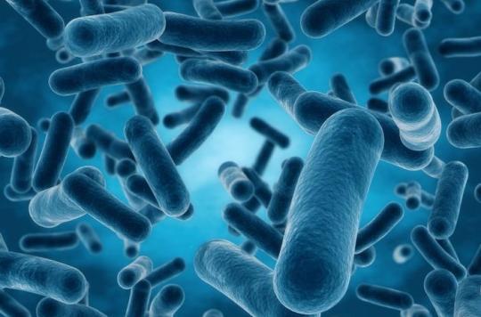 bacterie qui ronge les os