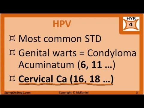 papilloma virus b19