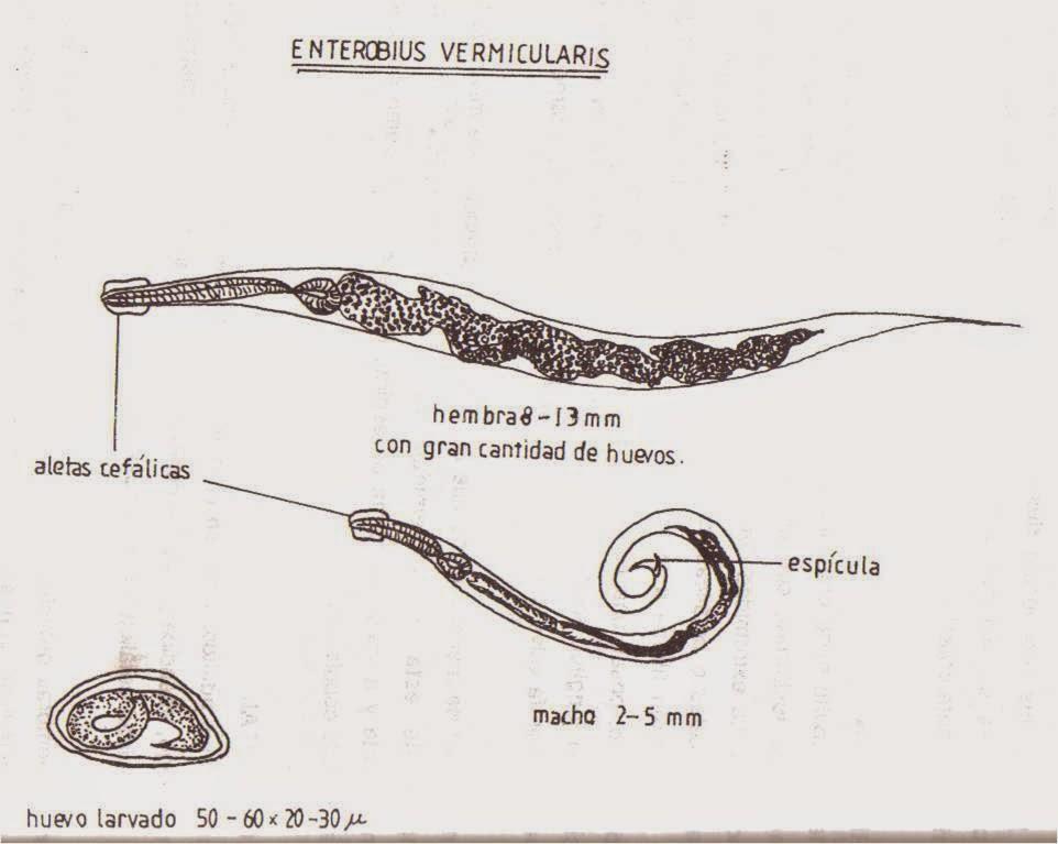 organismele sunt parazite cum să eliminați paraziții din cap