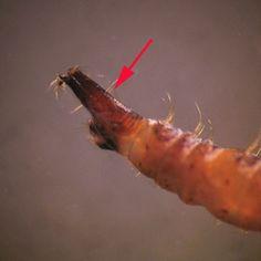 Ameba orală este un parazit