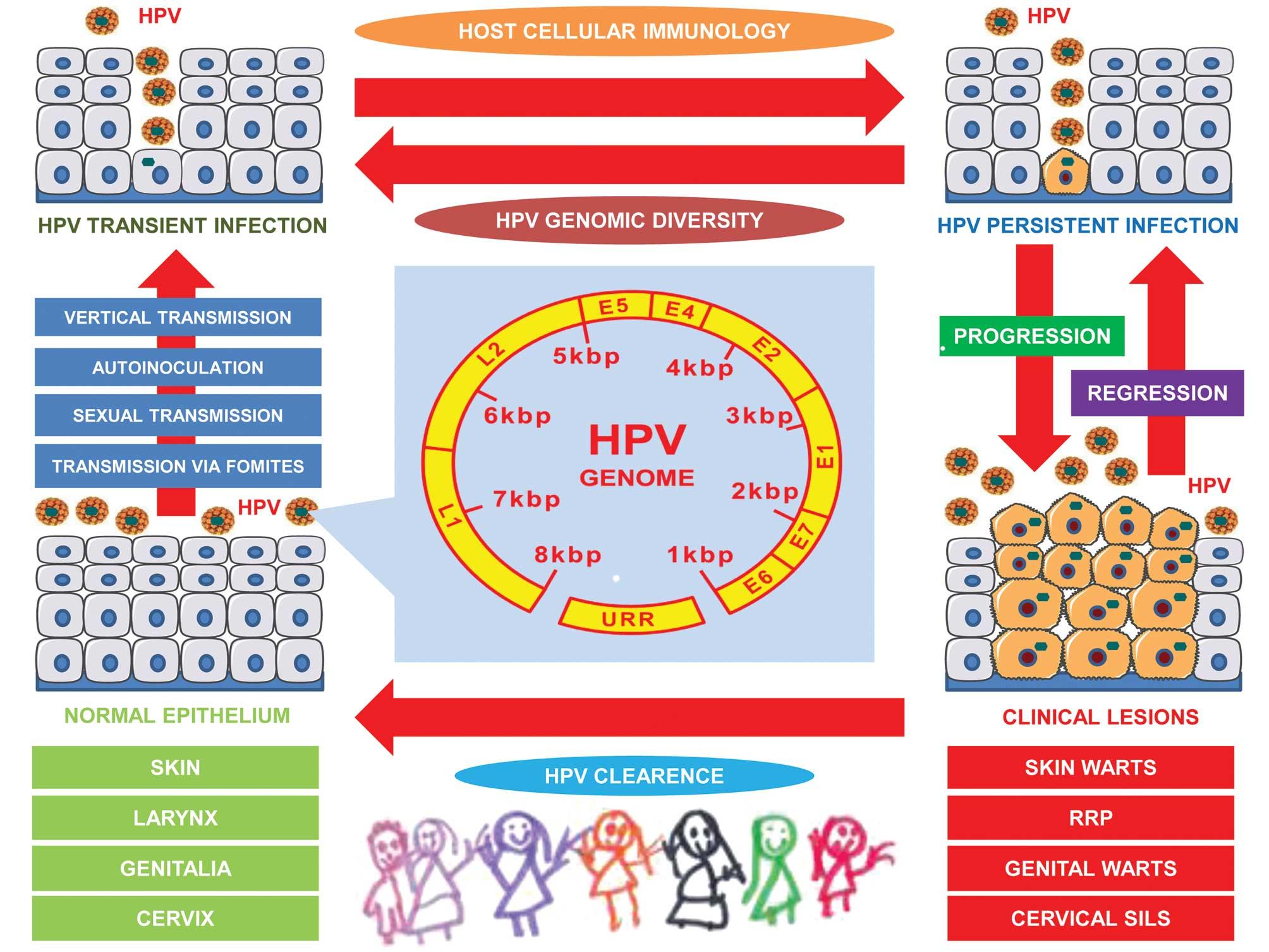 human papillomavirus in neonates