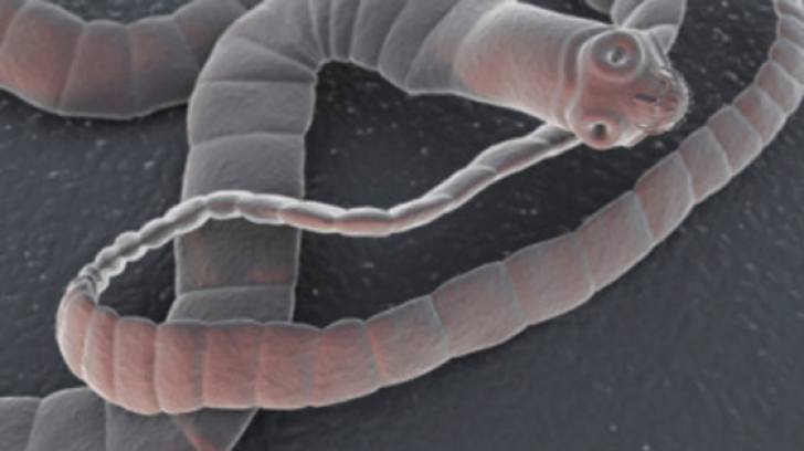 un om cu vierme human papillomavirus pregnant