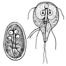virus del papiloma amor gastric cancer biomarker