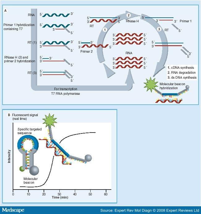 hpv high risk screen mrna habitat de nematode umane