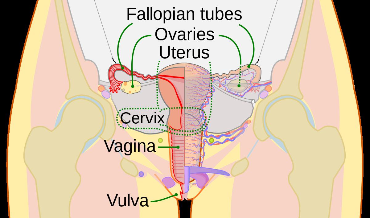papillomas gum metastatic cancer in colon