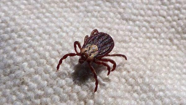 papiloma virus embarazo efectul tratamentului cu paraziti