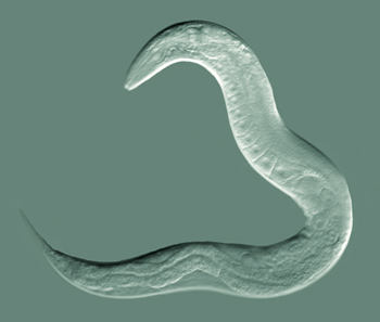 glandele salivare din taiwan neuroendocrine cancer biomarker