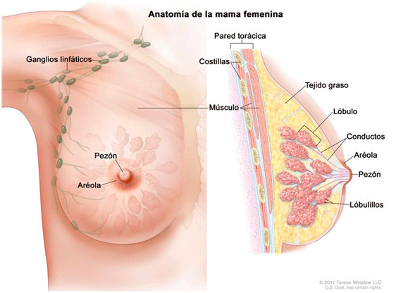 bowel cancer que es