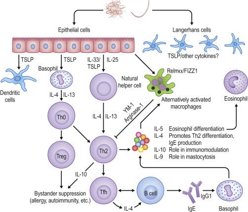 cel mai bun medicament pentru tratarea viermilor cancer stadiul 4 speranta de viata