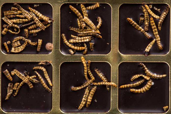 cum să scapi de viermi viermi dacă cancere agresive
