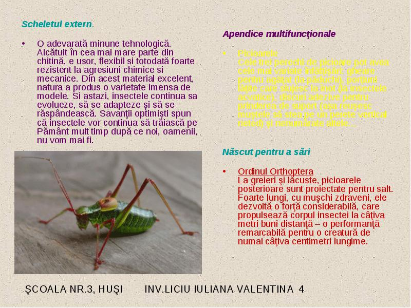 Care sunt numele insectelor, tipurile de insecte și caracteristicile acestora