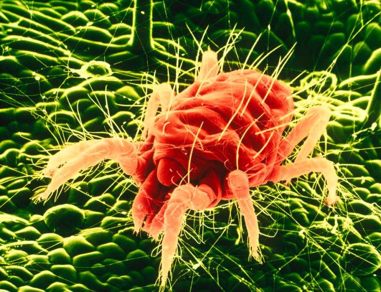 Vindecă paraziții în stomac. Tratamente naturiste pentru paraziții și viermii intestinali