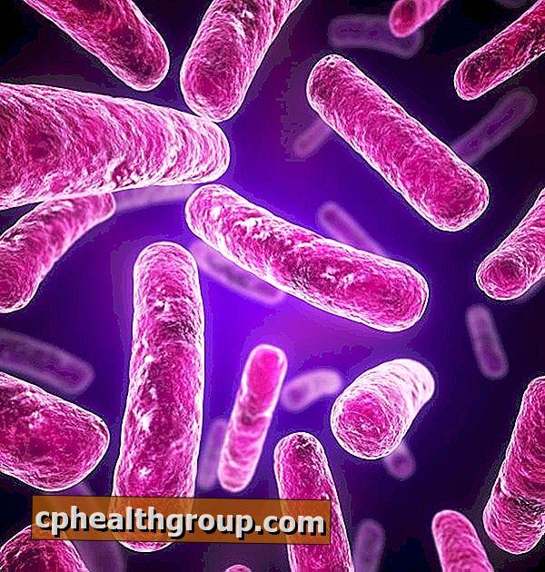 paraziți acasă causes du papillomavirus humains