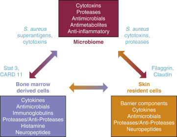 dysbiosis microbiome