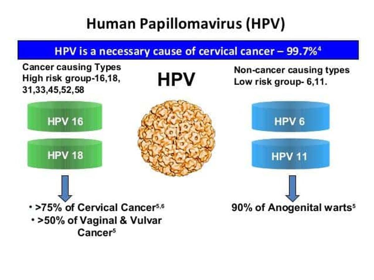 hpv virus cancer cells