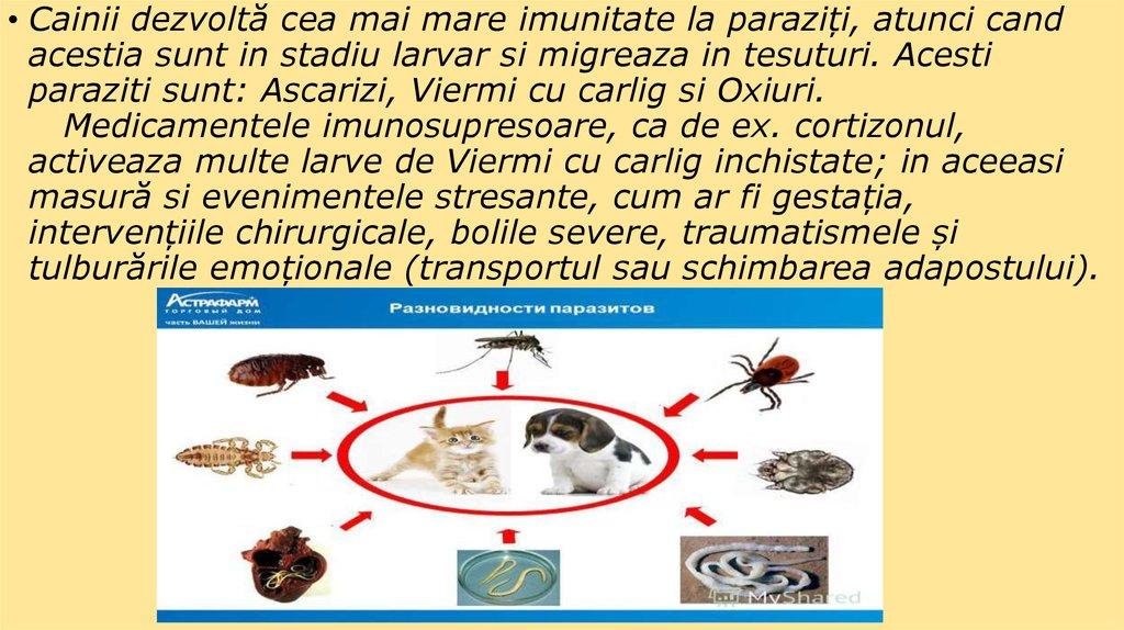 sunt cei mai comuni paraziți oxiuros tratamiento aeped