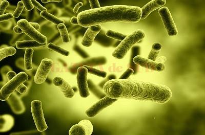 bacterii utile
