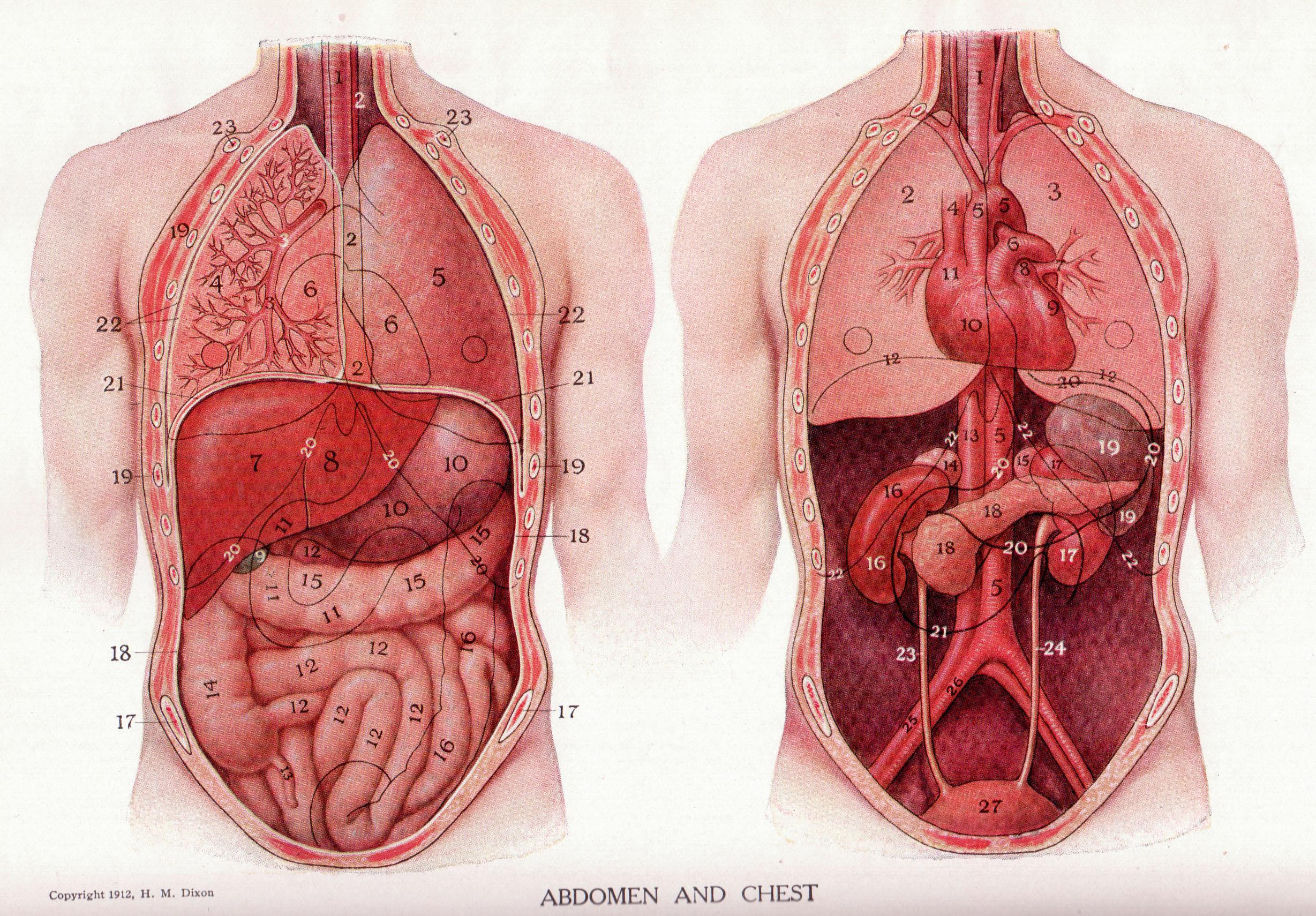 papilloma virus quando vaccinarsi