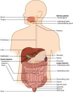 viermi în spirală la un copil efecte detoxifiere colon