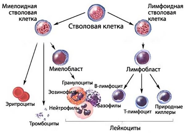 câți helminti trăiesc familial cancer program uvm