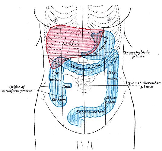 cum să vindecăm corpul uman vestibular papillomatosis common in pregnancy