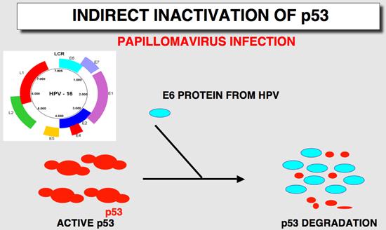 hpv cancer mutation