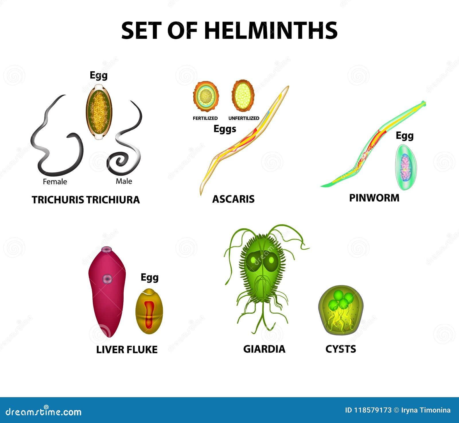 squamous papilloma vs wart redoxon vitamina c ingredientes