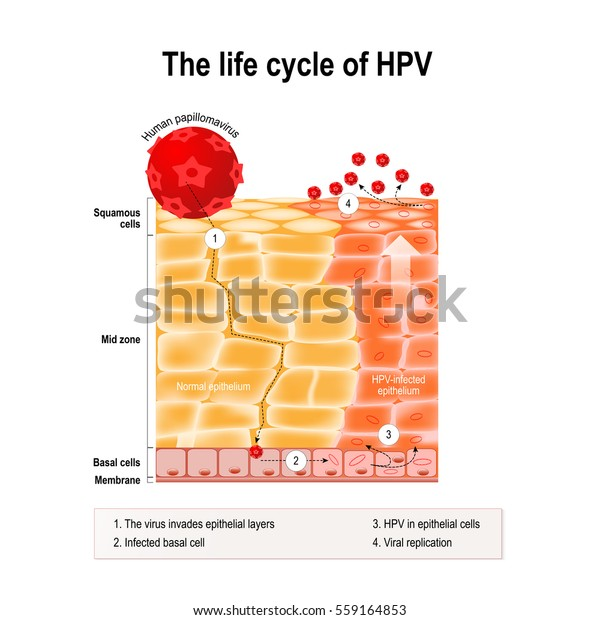 define prefix helminth hpv vaccine cures skin cancer