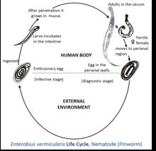 human papillomavirus vaccine three is human papilloma virus always sexually transmitted