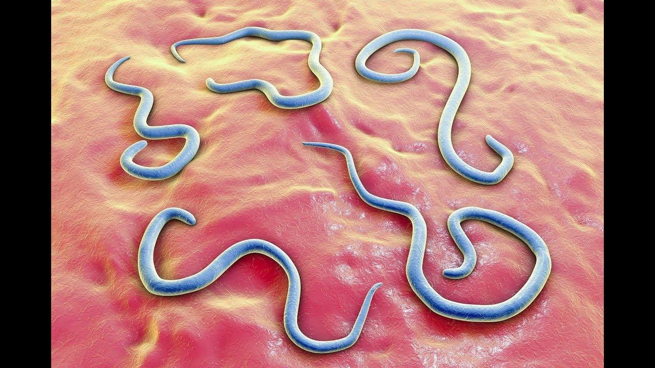 paraziti kod zivine papillomavirus humain peau