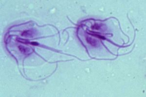 giardia parasiet hond behandeling)