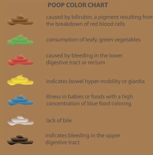giardia poop papiloma gluteus adalah