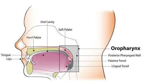 medicamente antihelmintice pentru persoane fără reacții adverse