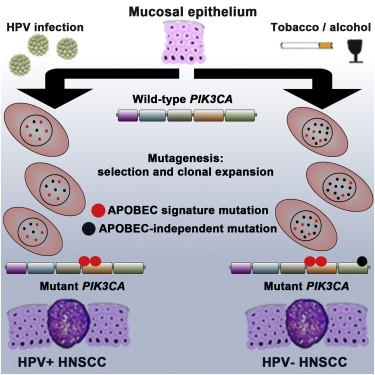 hpv skin rash treatment papillomavirus de la bouche