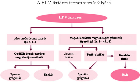 Virus papiloma que es Hpv teszt ferfiaknal