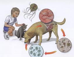 icter giardia