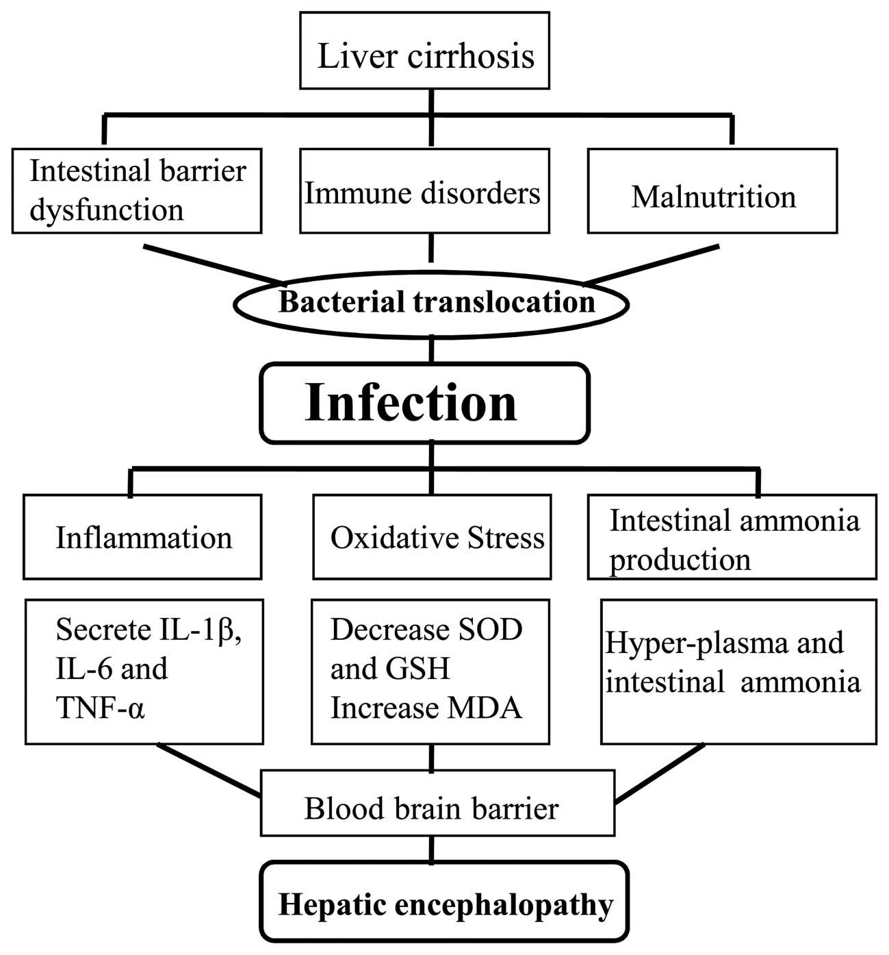 liver cancer hepatic encephalopathy bacterii utile omului